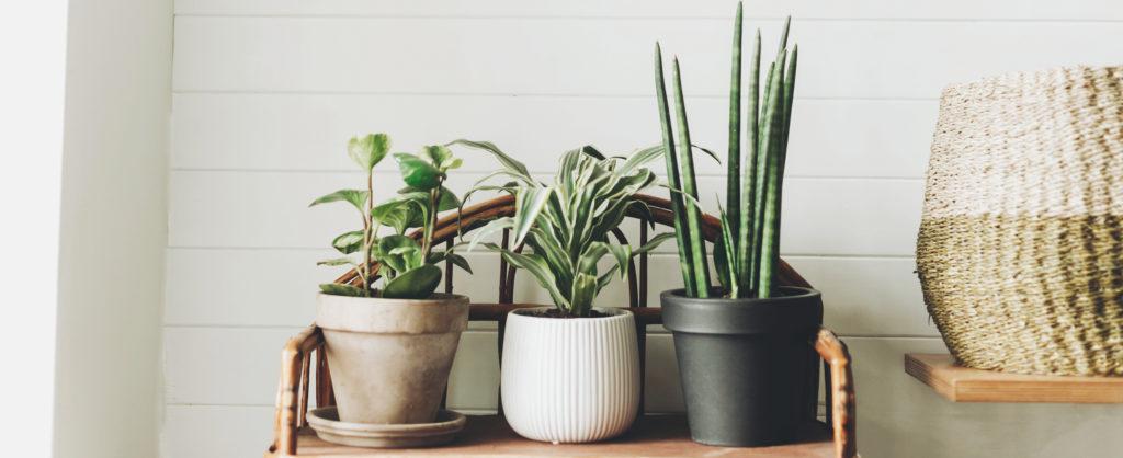 Growing plants indoors: A beginner's guide